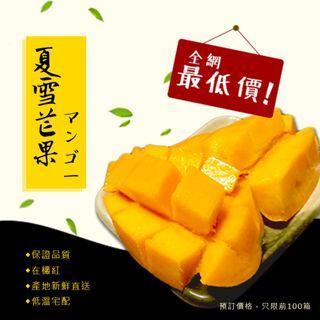 夏雪芒果 水果禮盒 芒果