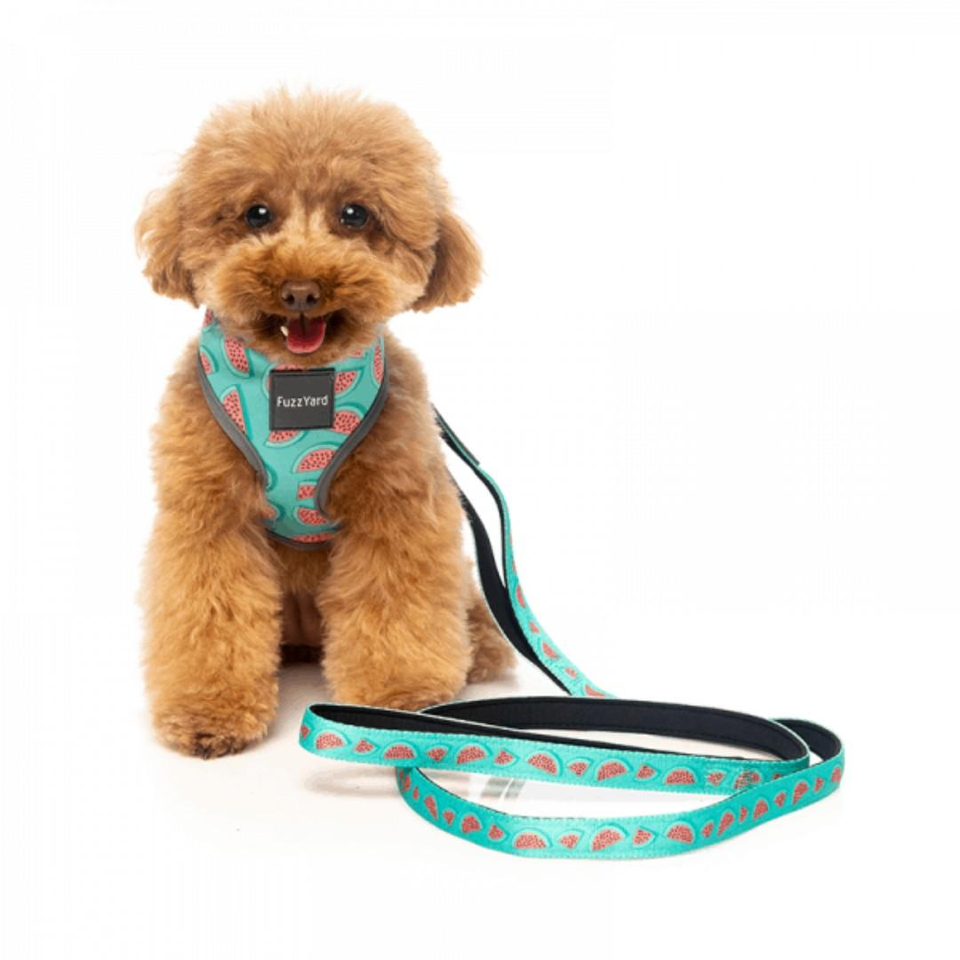 FUZZYARD Summer Leash