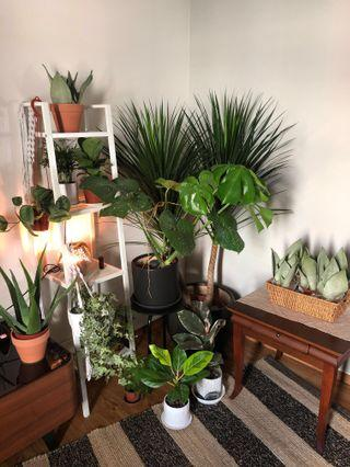 Various Ready-to-Use Indoor Plants