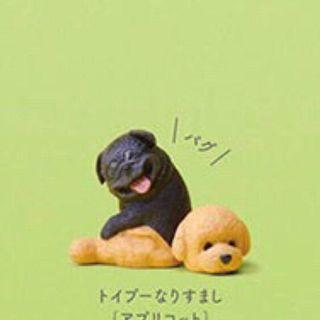 🚚 (現貨)扭蛋 轉蛋 動物檔案系列 人氣裝扮篇 狗 變裝 Stasto Stones 巴哥 巴哥犬