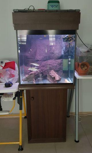 2ft cabinet tank