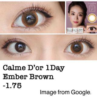 Calme D'or 1day con in #Ember Brown