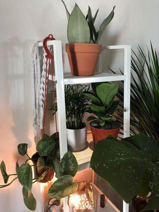 Beautiful House Plants for Sale