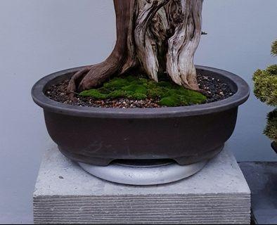 Big Bonsai Pot