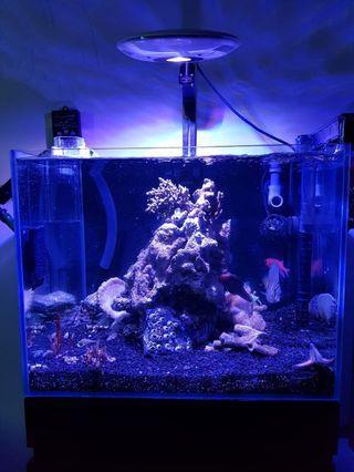 Customise fish tank (w cabinet)