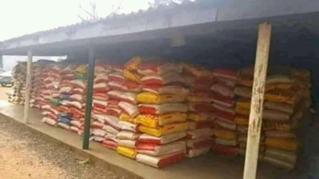 Rice and groundnuts available now on sale