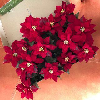 Christmas Poinsettias #EndgameYourExcess