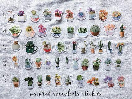 Assorted Succulent Stickers