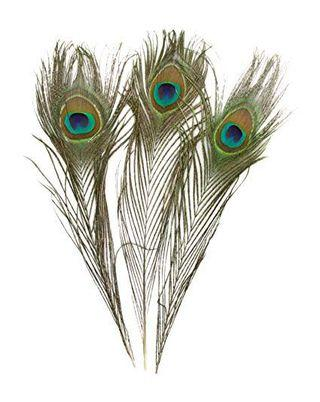 Peacock Feathers (Qty:16)