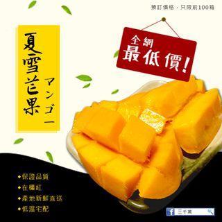 夏雪芒果 水果 禮盒