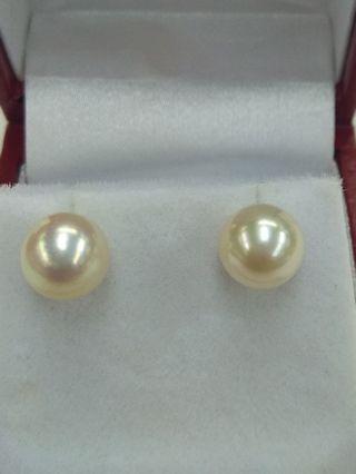 18K White Gold Japanese Sea Water Pearl Earrings