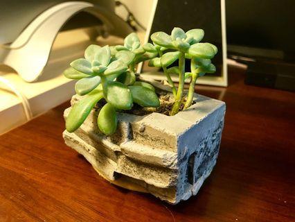 辦公桌植栽 迷你水泥盆石蓮