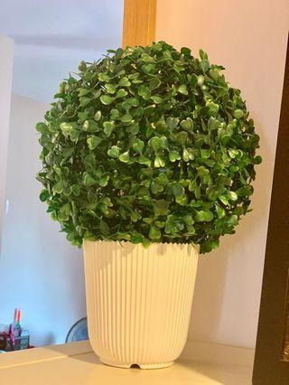 Topiary plant and vase