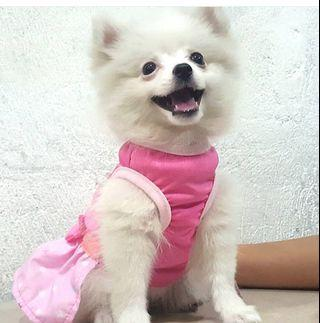 Bow Pink Dog Clothes