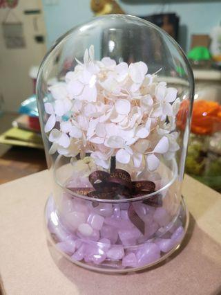 保鮮花擺設 preserved hydrangea 手工藝