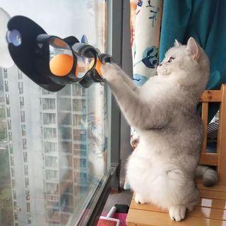 貓貓玩具 (運動 減肥 健康 寵物 Cat 猫星人 滾動球 用品)