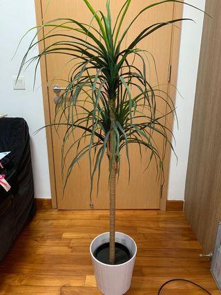 Fake IKEA plant with pot