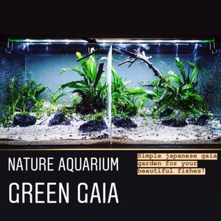 Nature Aquarium - Green Gaia