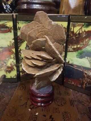Desert rose 沙漠枚桂 150mm