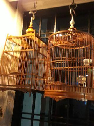 Two good cage can trade finch bird blackthoart