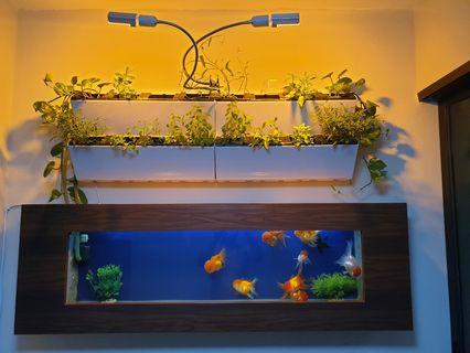 Custom wall mounted aquaponics fish tank