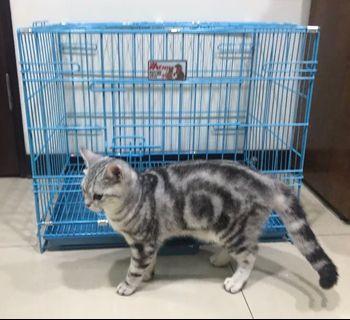 貓狗寵物籠 9.9成新