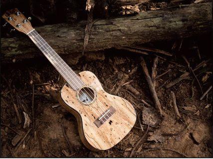 "非常獨特,uma 23"" uk-07 concert ukulele Spalted Maple 朽木 夏威夷小結他 23吋 小吉他 烏克麗麗"