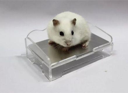 Hamster cooling bed