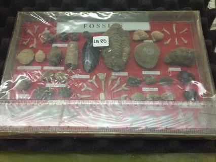 Glass frammed fossil