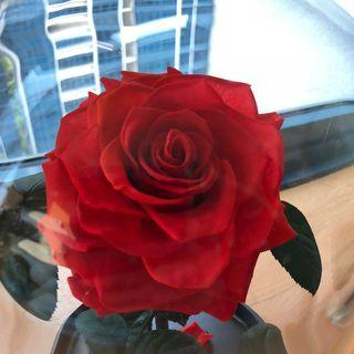 🚚 Beautiful Red Rose in a glass dome with 'Happy Birthday' gold plaque