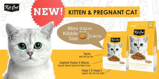 KitCat dry food