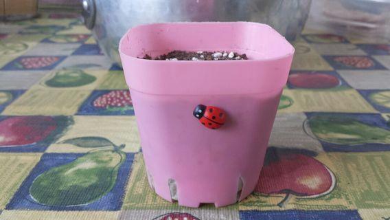 Cactus succulent mix soil perlite sand for better drainage diy garden plant pot potting mix ladybug mother of thousands A gift that lasts Children's Day Teacher's Day