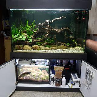 4ft tank with smaller tank for sale!