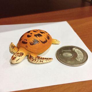 🚚 海龜 烏龜 烏龜公仔 烏龜扭蛋