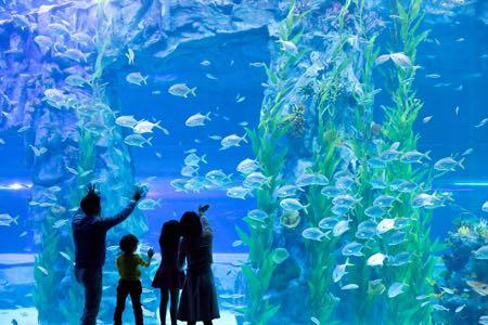 🚚 2 Sea Aquarium eTickets