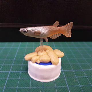 淡水魚扭蛋