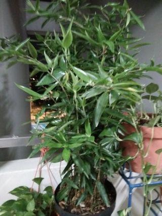 🚚 Plants