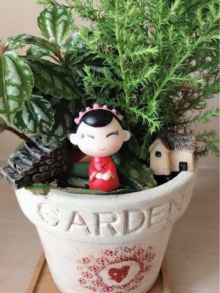 可愛小人偶 園藝多肉盆栽