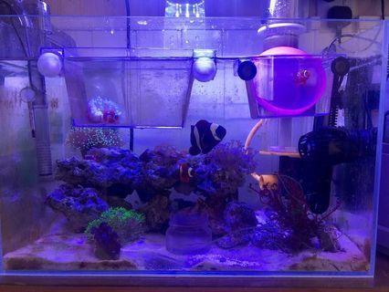 海水魚配套+送魚缸