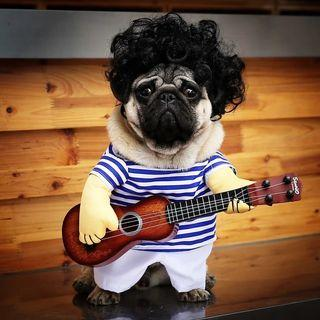 Dog clothes cat pet clothes take guitar player funny Teddy Bichon