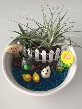 🚚 Totoro air plant terrarium