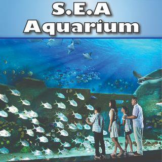 SEA  Aquarium - RESORTS WORLD SENTOSA  海洋馆 (ETICKETS)