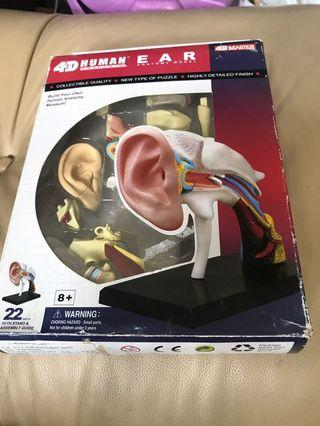 4D human ear