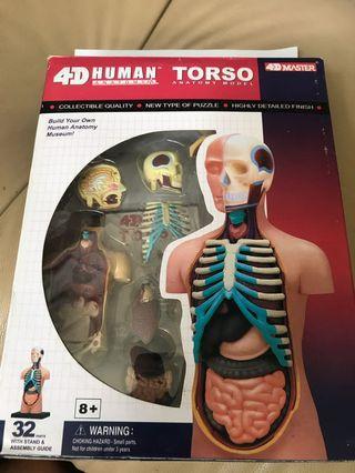 4D human body