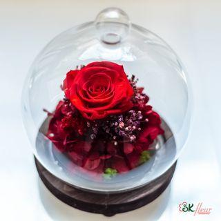 GREENHOUSE (24cm tall) DOME SHAPED GLASS WITH LED LIGHT - PREMIUM RED PRESERVED ROSE