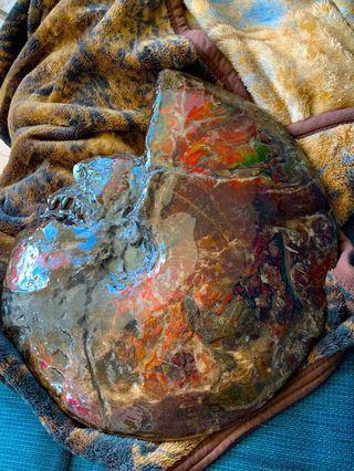 Large Ammolite