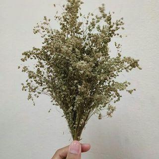 Bouquet Baby Breath Local