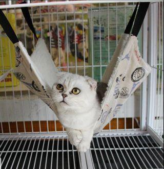 cat hammock - large size