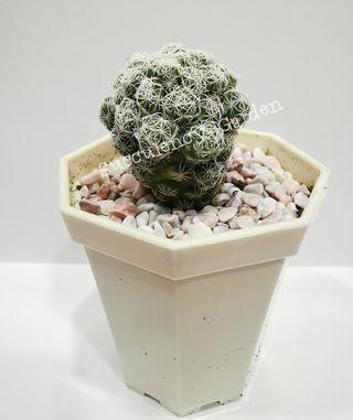 New Arrival-Succulent for Sale - Ready Stock (Batch 1)