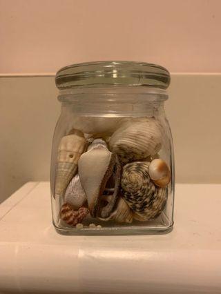 貝殼擺設(取自印尼民丹島)